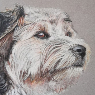 Pet portrait using coloured pencils by Jacqueline Todd Artist