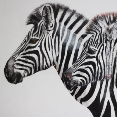 Oil on canvas of zebras by Jacqueline Todd Artist